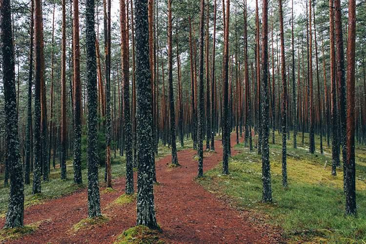 JORNADA DE PREPARACIÓN DEL VIAJE A FINLANDIA